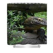 Wild Komodo Dragon Creeping Through Fallen Trees Shower Curtain
