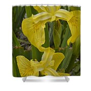 Wild Lilly Shower Curtain