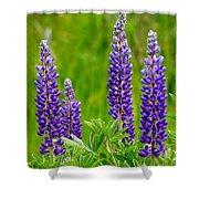 Wild Lupine Shower Curtain