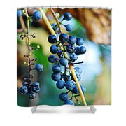 Wild Michigan Grapes Shower Curtain