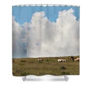 Wild Mongolian Horses Shower Curtain