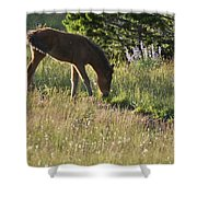 Wild Mountain Lupine Shower Curtain