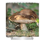 Wild Mushroom Shower Curtain