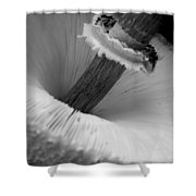 Wild Mushroom- B And W Shower Curtain
