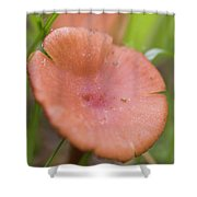Wild Mushroom 2 Shower Curtain
