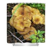 Wild Mushrooms 1 Shower Curtain