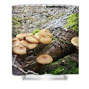 Wild Mushrooms 2 Shower Curtain