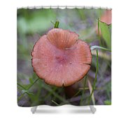 Wild Mushrooms 3 Shower Curtain