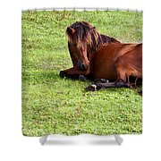 Wild Mustang At Rest Shower Curtain