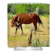 Wild Mustang Shower Curtain