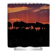 Wild Mustangs At Sunset Shower Curtain