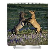 Wild Mustangs Playing 1 Shower Curtain