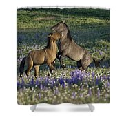 Wild Mustangs Playing 2 Shower Curtain