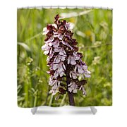 Wild Orchid In Meadow  Shower Curtain