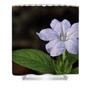 Wild Petunia Shower Curtain