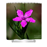 Wild Pink Shower Curtain