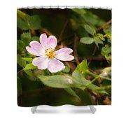 Wild Pink Eglantine Shower Curtain