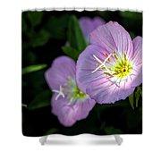 Wild Primrose Shower Curtain