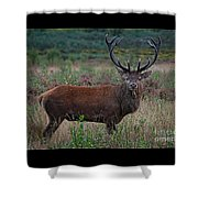 Wild Red Deer Stag Shower Curtain