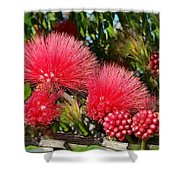 Wild, Red Fluffy Flowers  Shower Curtain