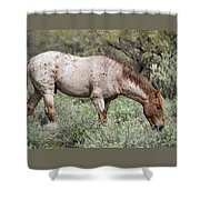 Wild Roan Stallion  Shower Curtain