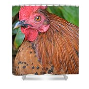 Wild Rooster Shower Curtain