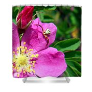 Wild Rose And The Spider Shower Curtain