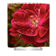 Wild Rose As Oil Shower Curtain
