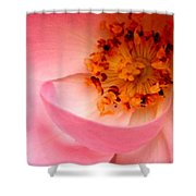 Wild Rose Bowl  Shower Curtain