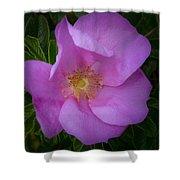 Wild Rose Shower Curtain by Garvin Hunter