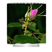 Wild Rosebud Shower Curtain