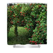 Wild Rosehips Shower Curtain