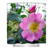 Wild Roses 2 Shower Curtain