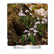 Wild Spring Beauty Shower Curtain
