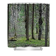 Wild Spring Forest Shower Curtain