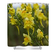 Wild Toadflax Shower Curtain
