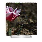 Wild Tulip Shower Curtain