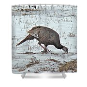 Wild Turkey - Meleagris Gallopavo Shower Curtain