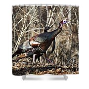 wild Turkey 2 Shower Curtain