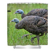 Wild Turkey In Shiloh Military Park Shower Curtain