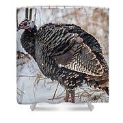 Wild Turkey Not The Whiskey Shower Curtain