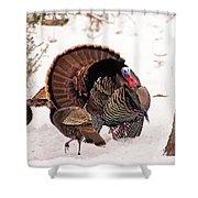 Wild Turkey Parade Print Shower Curtain