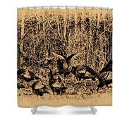 Wild Turkeys Shower Curtain by Bill Cannon