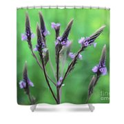 Wild Vervain Shower Curtain