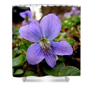 Wild Violet 1 Shower Curtain