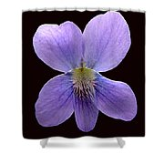 Wild Violet On Black Shower Curtain