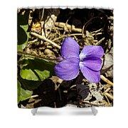 Wild Violet Shower Curtain