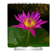 Wild Water Lily Shower Curtain