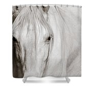 Wild White Horse Shower Curtain