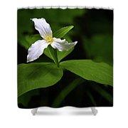 Wild White Trillium Shower Curtain